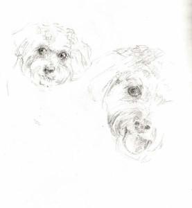 Brandy_face_sketch_in_pencil_MDorn