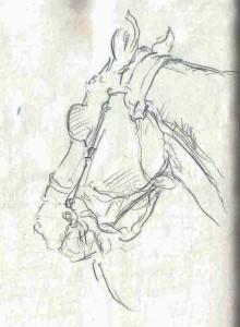 horse_Rome (1)005