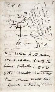 Charles_Darwin_notebook)1837-8