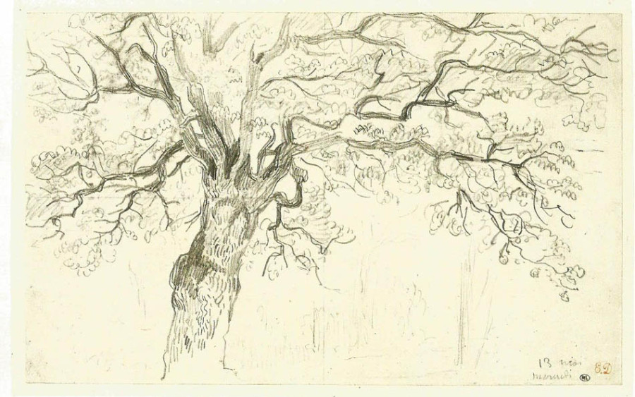 Delacroix study of an oak