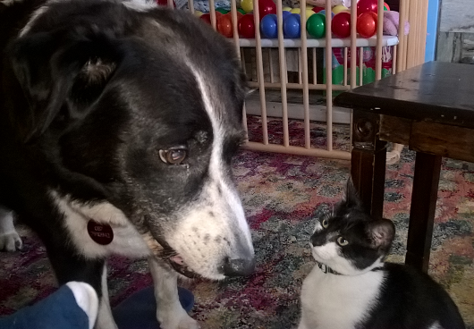 will may cat share the litter box with the dog