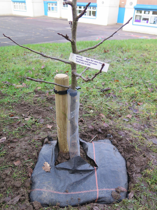 tree-resize