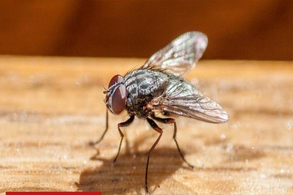 मक्खी को पकड़ने के चक्कर में धमाका कर बैठा बुजुर्ग, मकान की छत और किचन हुआ तहस-नहस