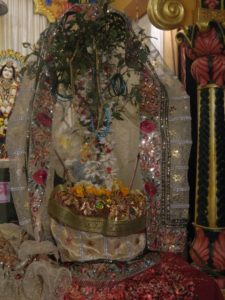 What is the best way to worship Tulasi?
