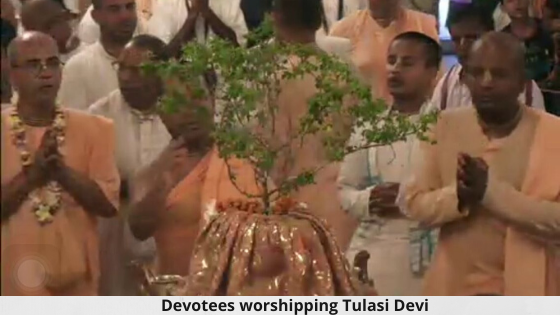 Worshiping Tulasi Devi at homes