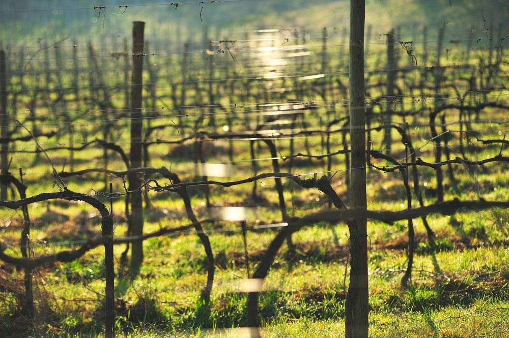 Organic Wine | Venturini Baldini