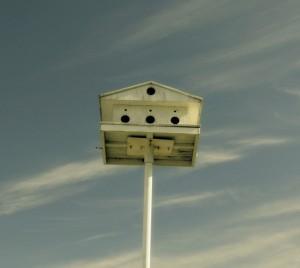 Nature House - Nick Jordan