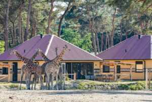 Beekse Bergen safari lodges