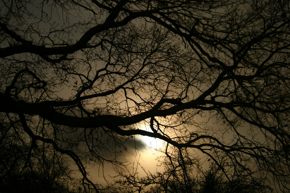 आदत - tree sillhouette photography