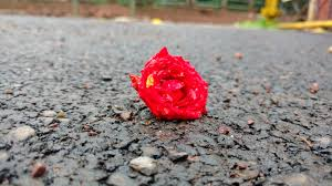 उम्र के निशान ,red rose on the streets. Lamhe Zindagi Ke, Hindi Poetry on Life