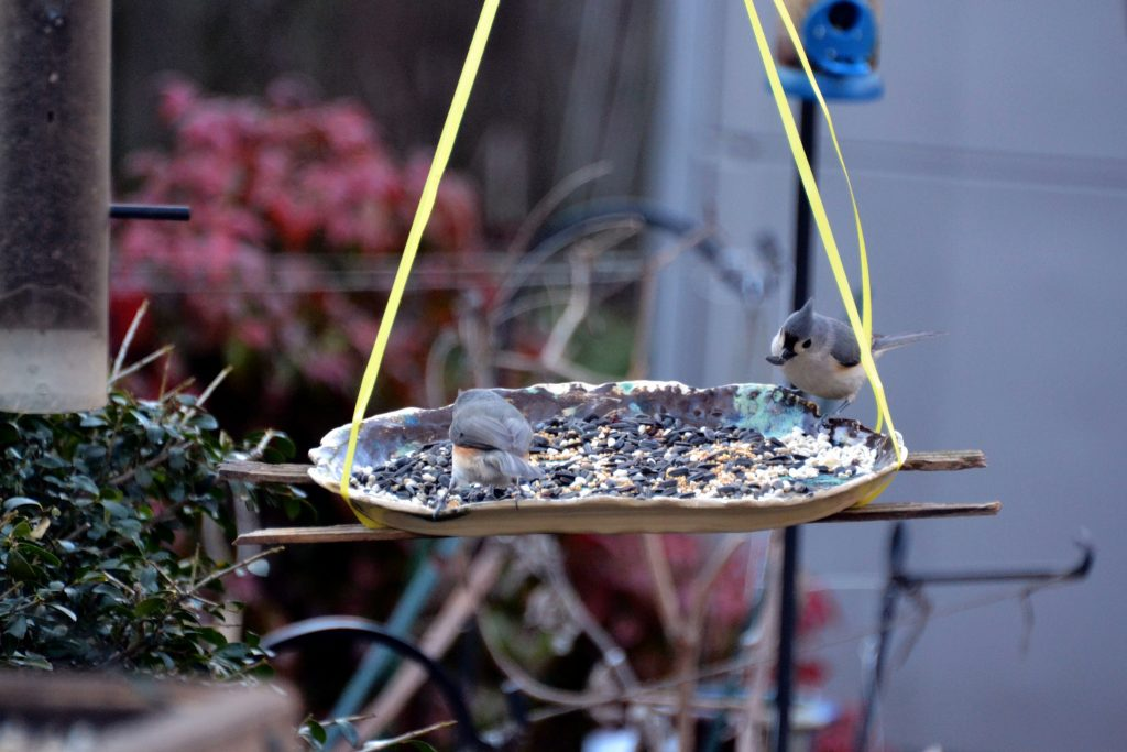 Bird feeder in a garden.