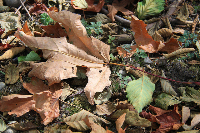 Close-up of a lawn which is covered in leaves, twigs and debris that should be removed during the fall season.