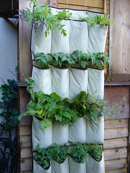 A white hanging shoe organizer used for growing plants in a vertical garden.