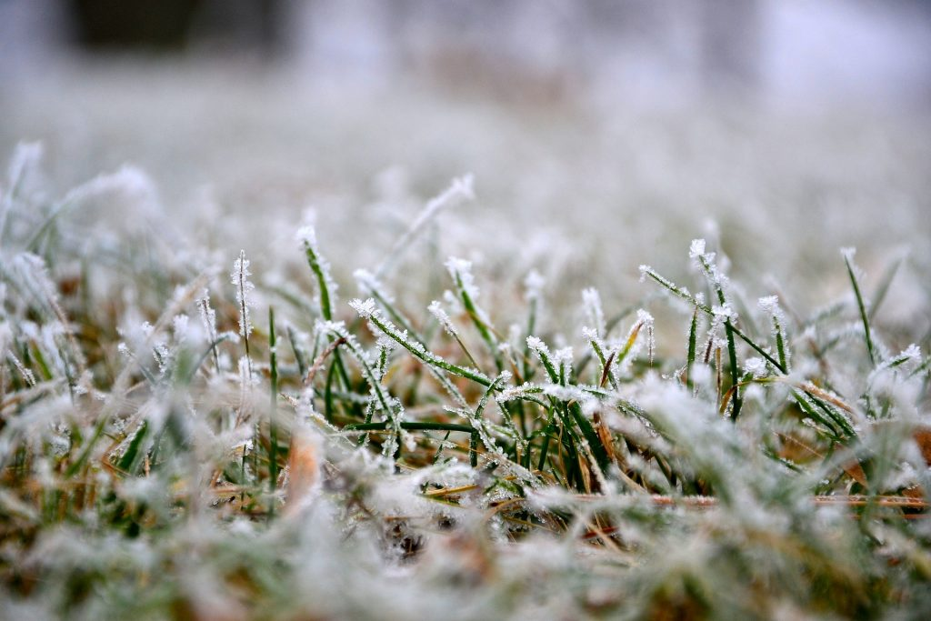 A garden lawn covered in snow