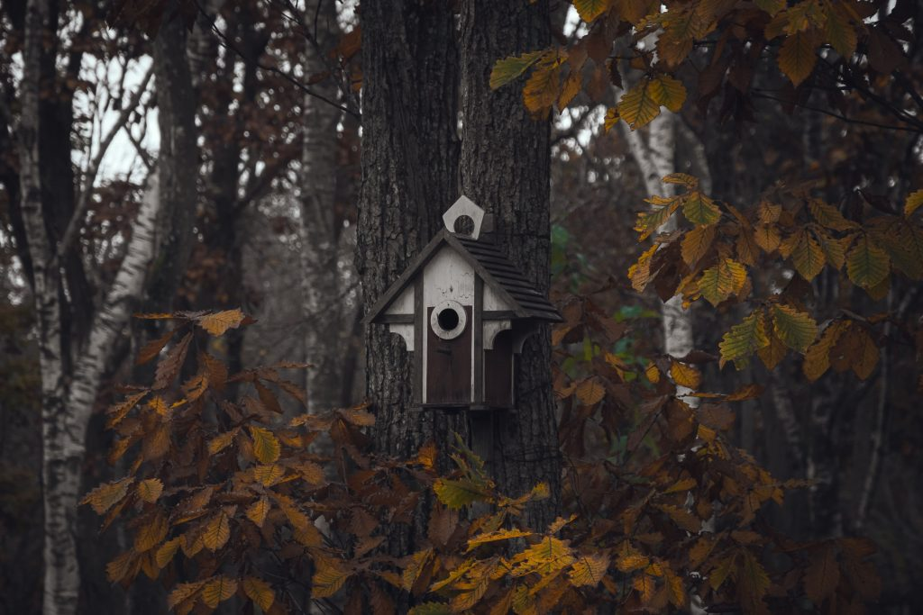 a cozy birdhouse in an autumn forest