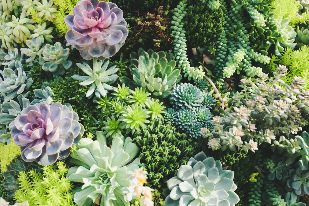 plants in different colors
