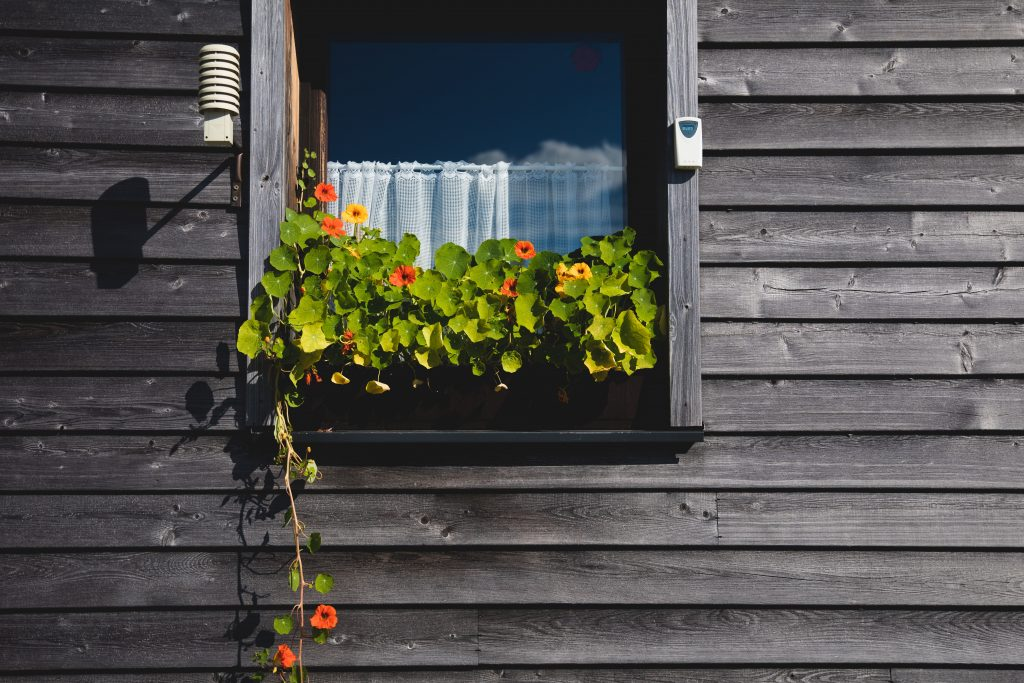 a window with a colorful plants in a window box