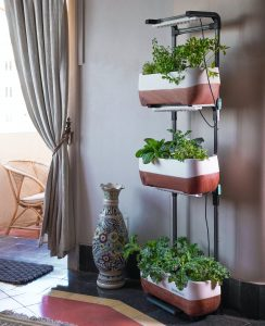 A cozy small vertical garden