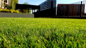 fresh green grass near a building