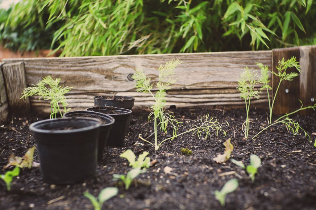 plants-in-raised-beds-green