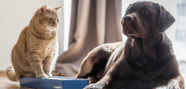 Live-in care supports older people living with pets