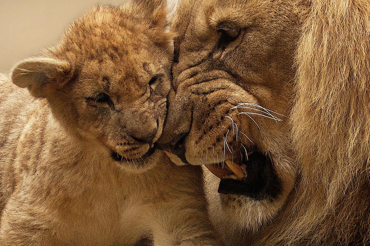 the-lion-king-review-2019-disney-movie-remake-entertainments-saga-latest-entertainment-news-india