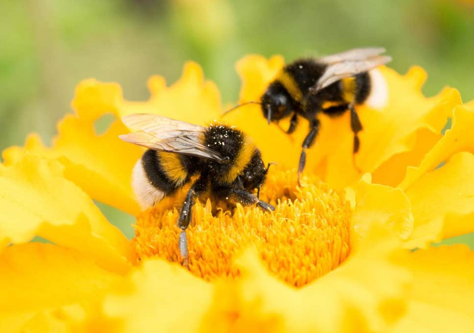 are bees friendly?
