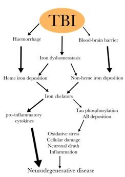 TBI leads to a multitude of neurotrauma