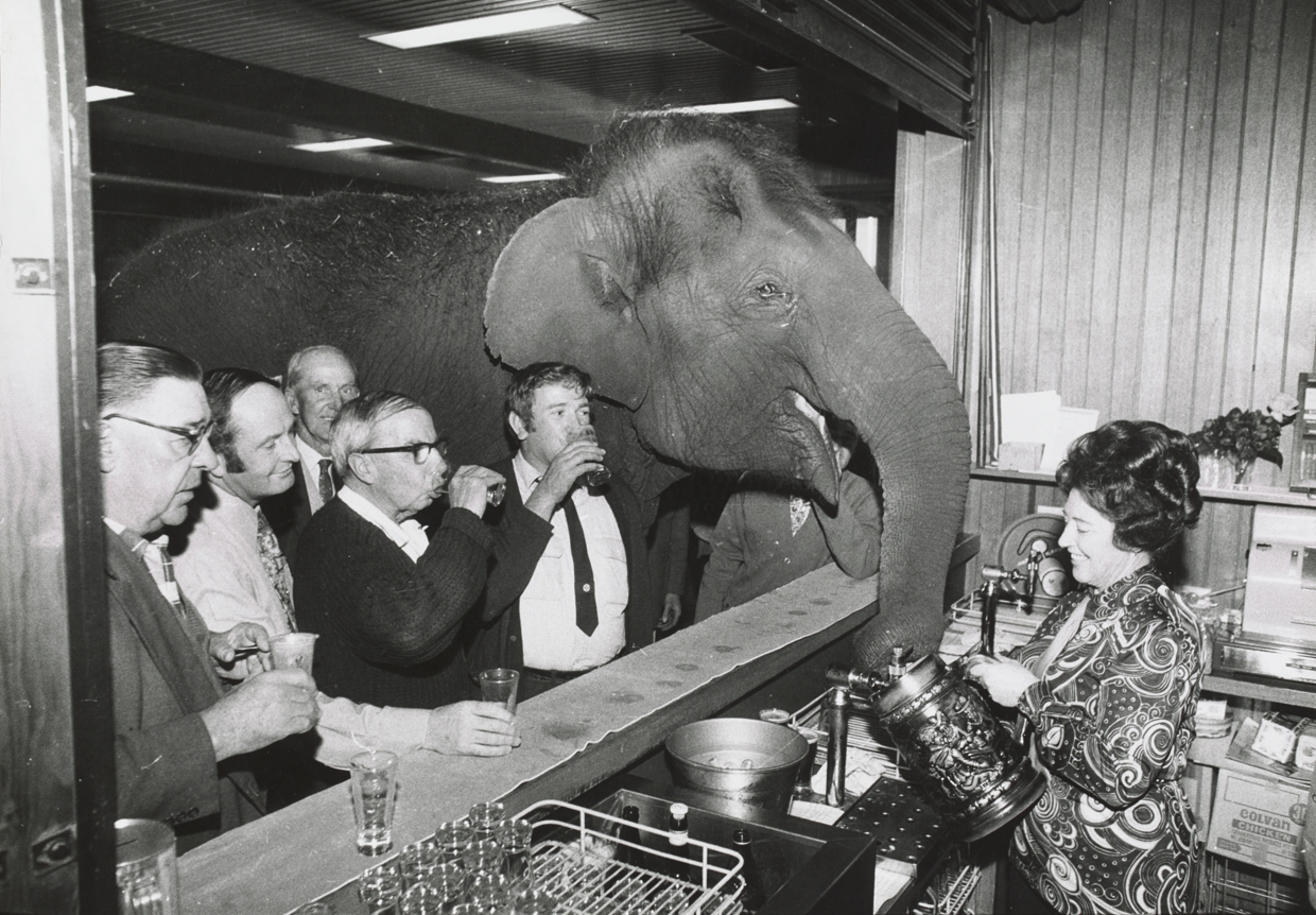 Real Elephant in the Room