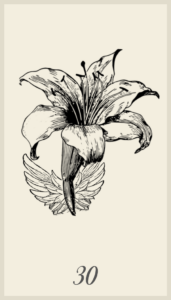 Lenormand Lily Combinations