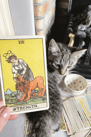 Animals in fortune telling Tarot, Lenormand, bone reading, oracle cards, crystal balls