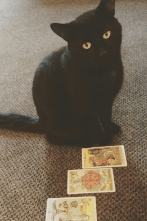 The Meaning of Apantomancy