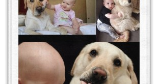 Funniest Baby And Animal Video 1