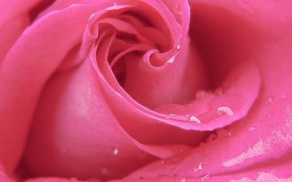 Benefits Of Rosewater For Healthy Skin