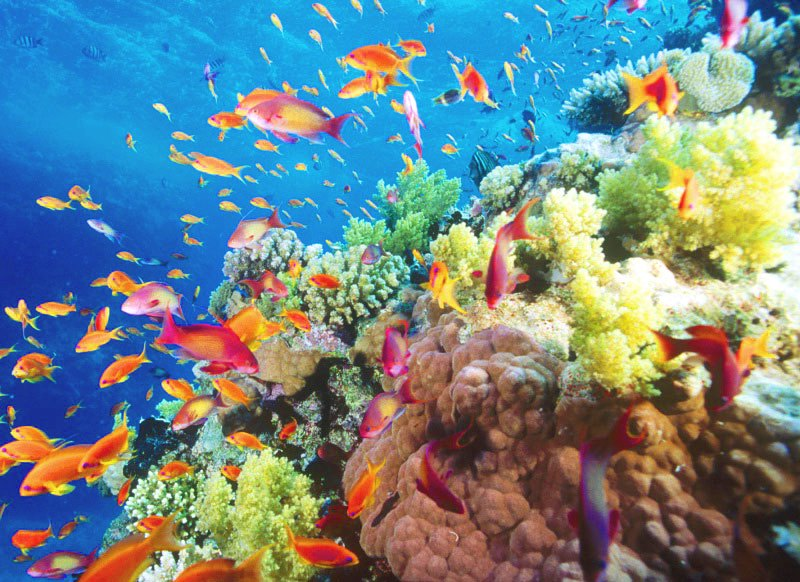 reefdiversity