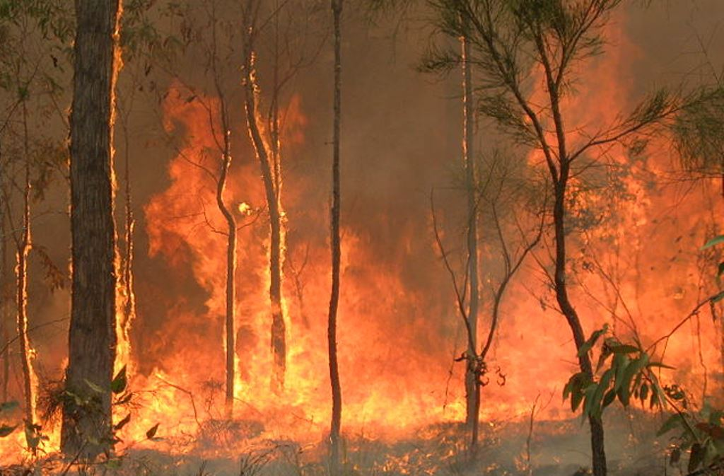 Australia Burns as the Political Debate Continues to Rage