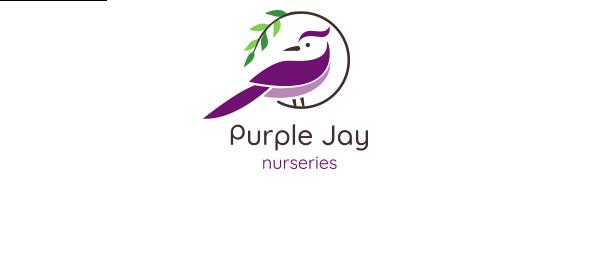 Purple Jay