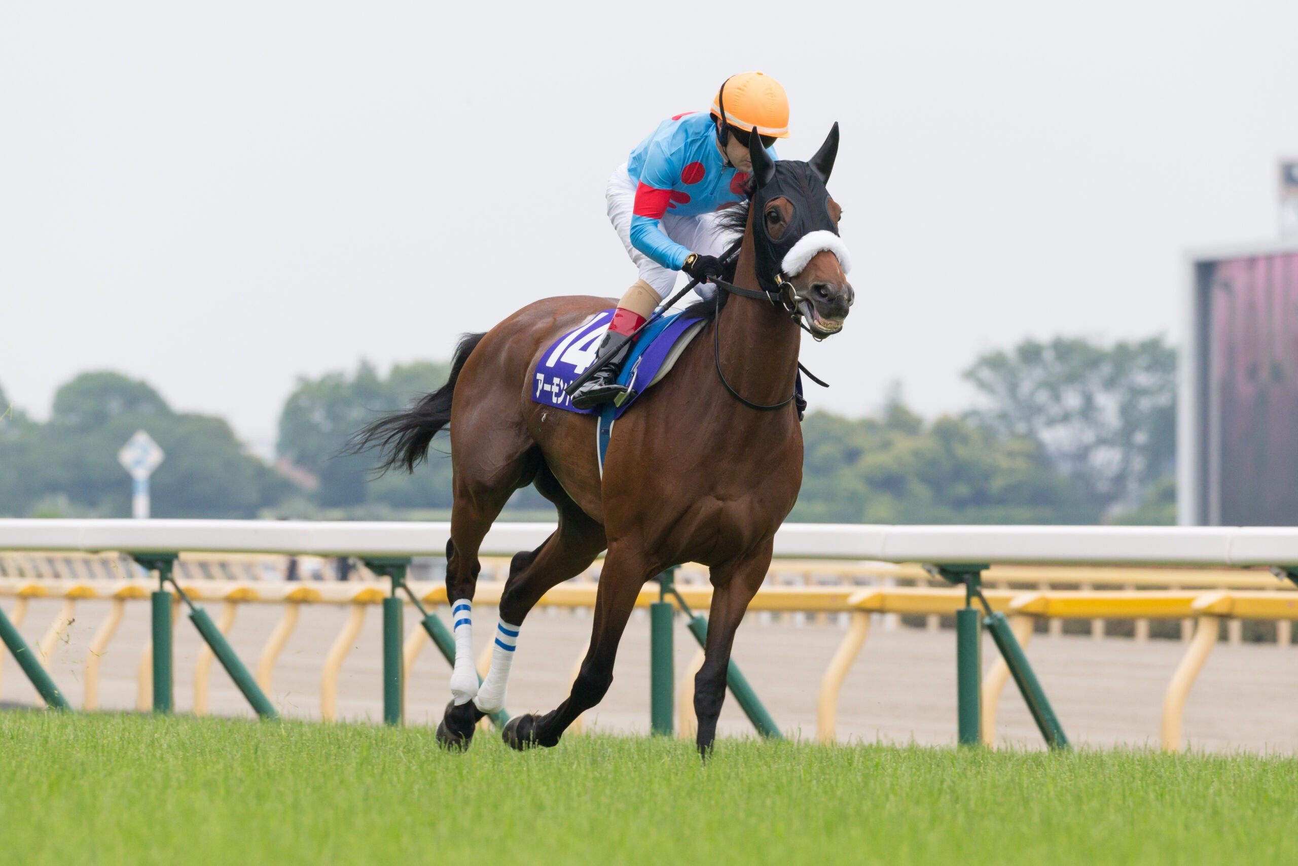 Japanese mare Almond Eye blitzed the field in the Group One Victoria Mile (1600m) in Tokyo.