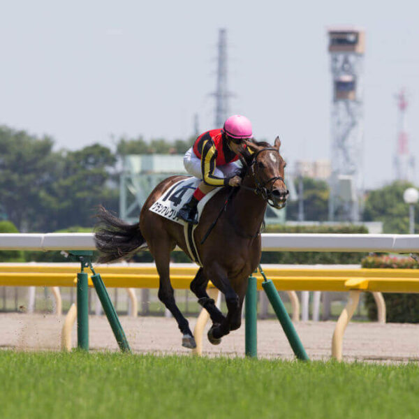 Gran Alegria takes out the G1 Yasuda Kinen over star rival Almond Eye.