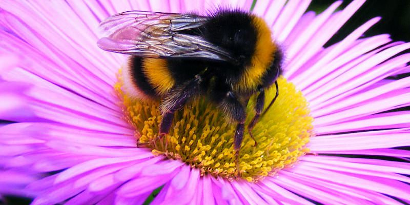 Bee Well with HealingYoga.ie