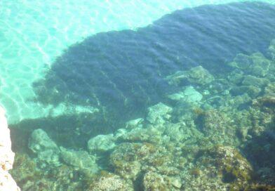 El Instituto de Ecología Litoral estudia la Posidonia de la Orihuela Costa