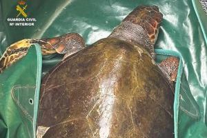 Peligro de extinción: Rescatan a una tortuga boba en el Pilar de la Horadada