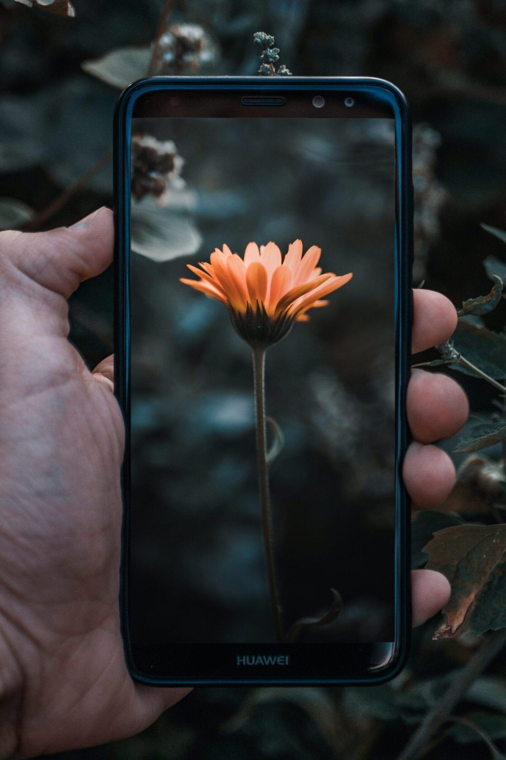 Flower on phone