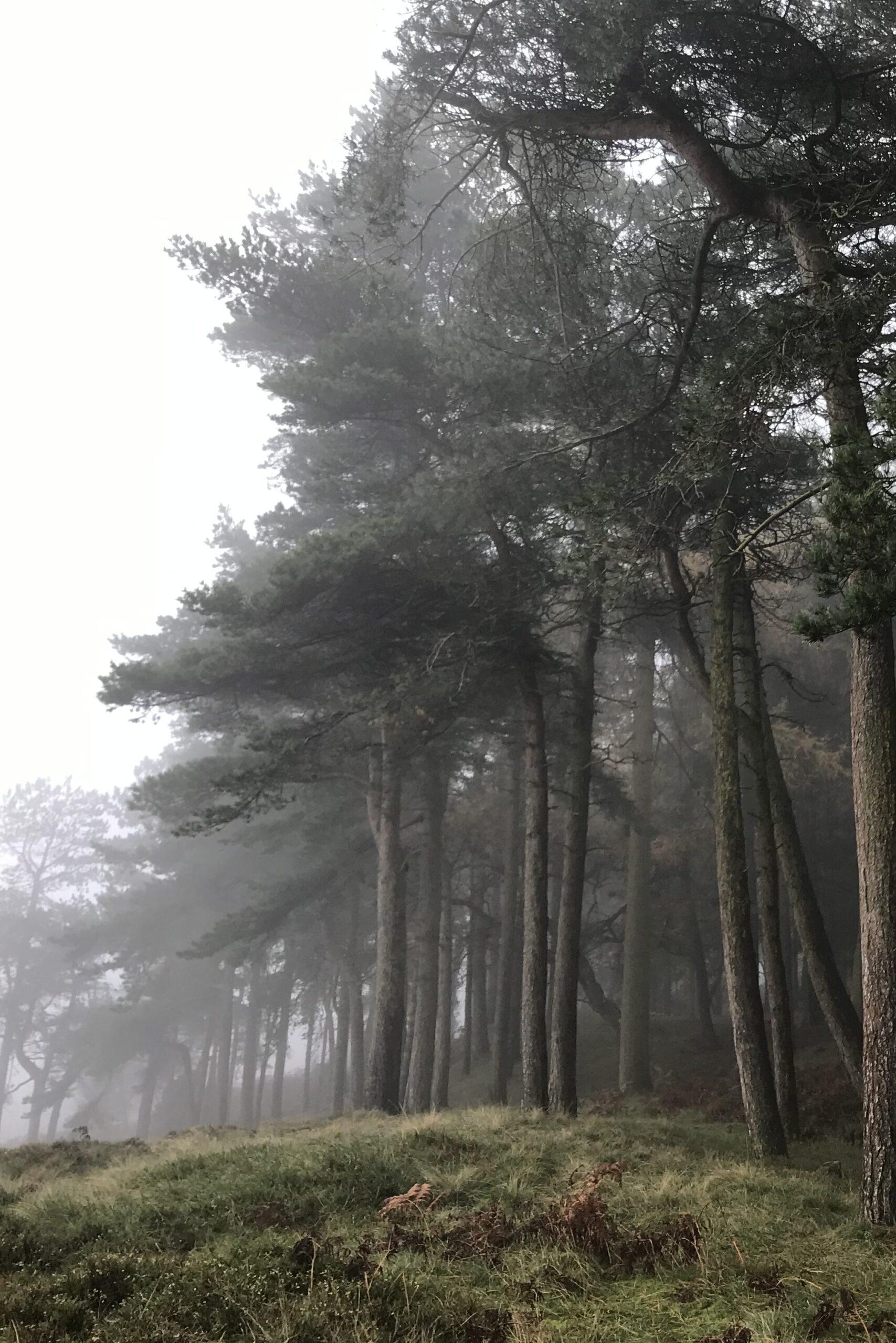 Misty Ilkley moor