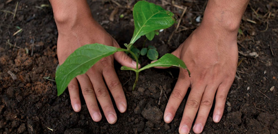 Nestlé lays focus on transition to regenerative food system