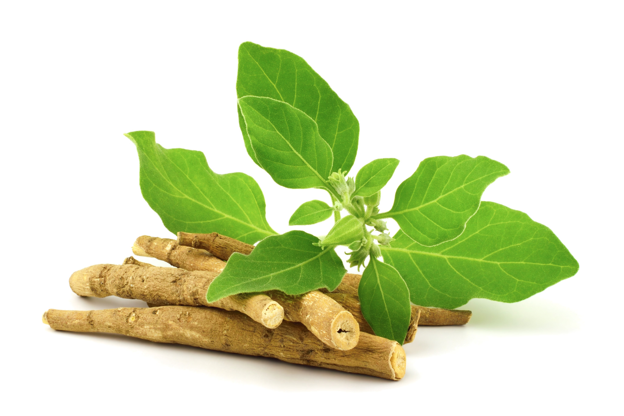 Food News - Arjuna Natural focuses on immuno-modulatory effects of ashwagandha