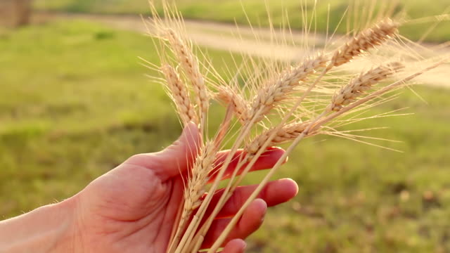 Food News 13-10-2021 - SLCM launches 'Made in India' QC app for food grains