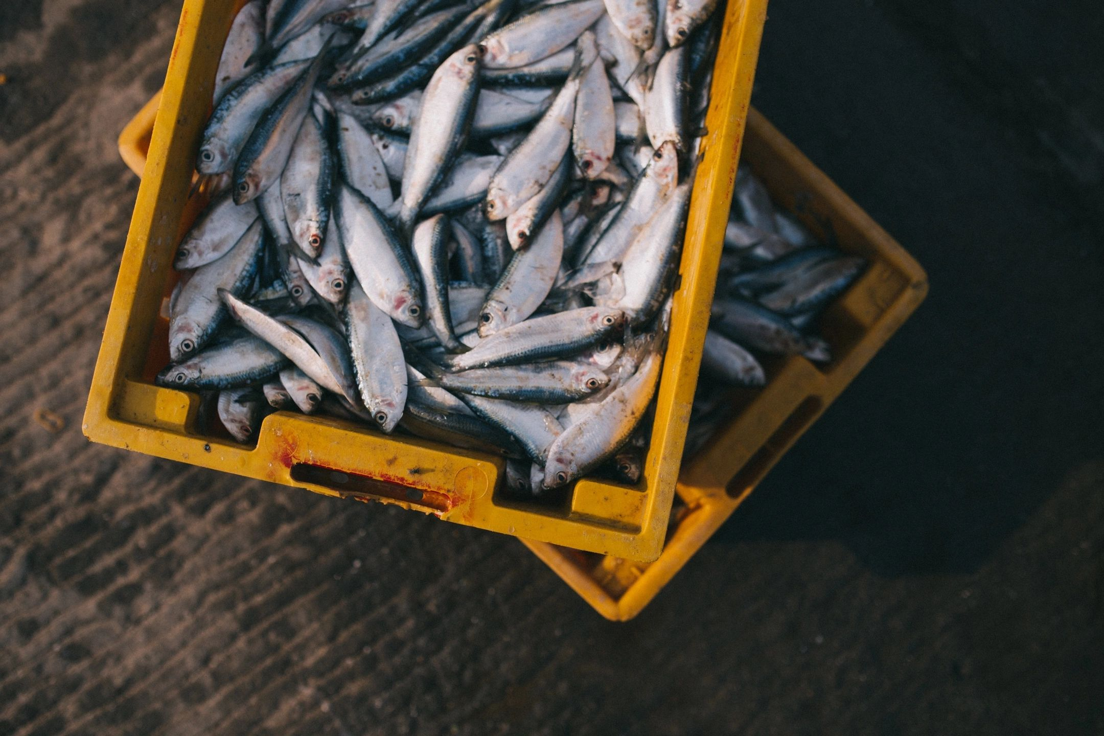 Food News - Consumption of fish as a tool for fighting malnutrition: ICAR-CIFRI