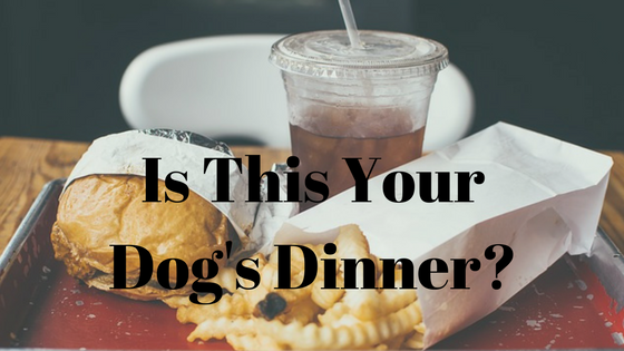 5 Reasons Not to feed Kibble to Your Dog