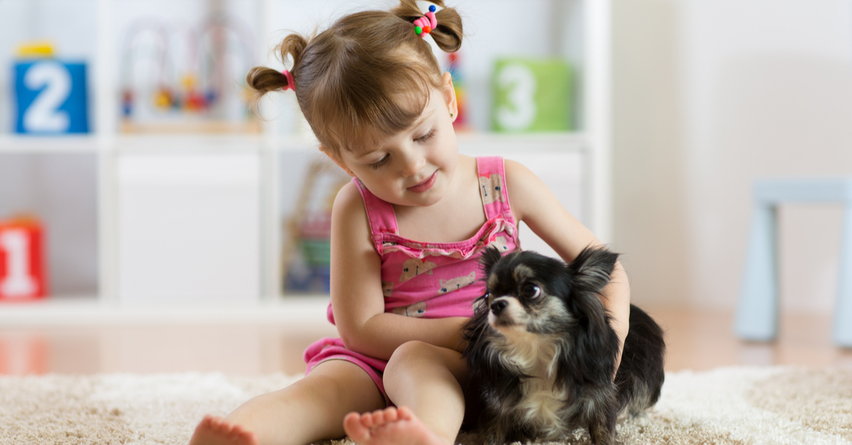 Chihuahuas and Children: Can they get along?